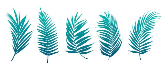 Fototapeta Beautiful palm tree leaf set green background vector illustration obraz