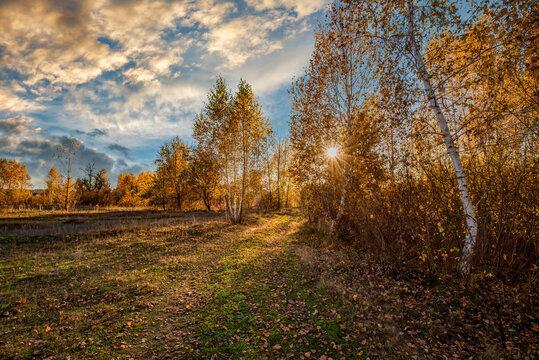 Amazing autumn scenery. Sun rays through autumn birch trees