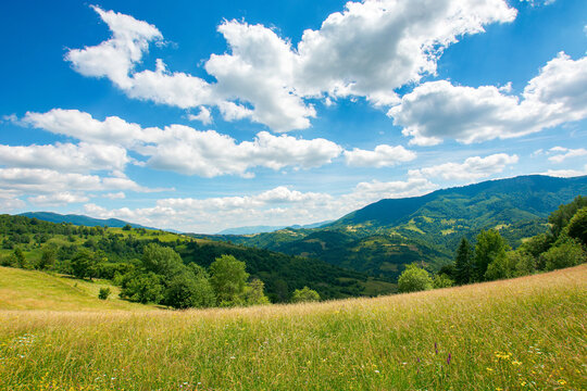 carpathian rural landscape in mountains. grass and herbs on the meadow, trees on the hills rolling down in to the valley. beautiful summer nature scenery on a sunny day with fluffy clouds on the sky