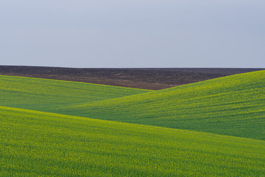 Cropland located on hills, Podilia region, South-Western Ukraine