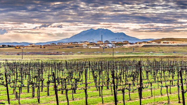 Spring view of vineyard in Contra Costa County; freeway and residential development visible in the background, on the foothills of Mt Diablo; East San Francisco Bay Area, California