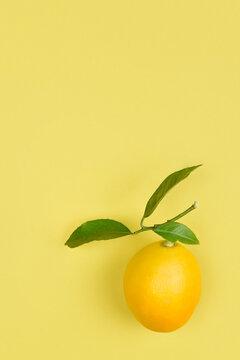 flat lay lemons on a yellow green background