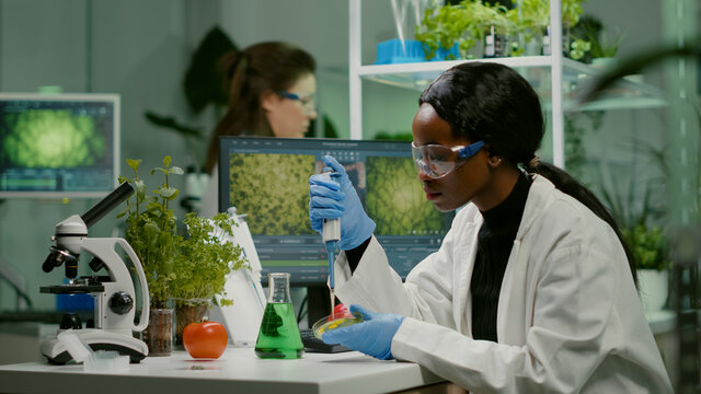 Biologist scientist african woman researcher taking genetic solution from test tube with micropipette putting in petri dish analyzing gmo of sapling working in biological laboratory.