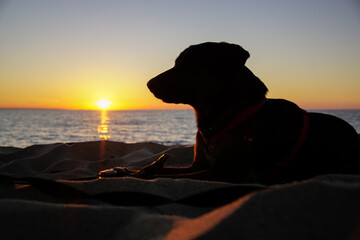 Fototapeta Pies i zachód słońca obraz