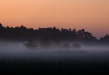 Świt mgła z drzewkami na drugim planie - fototapety na wymiar