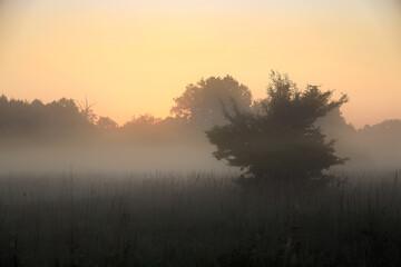 Fototapeta wschód słońca zza lasu z drzewkiem na pierwszym planie obraz