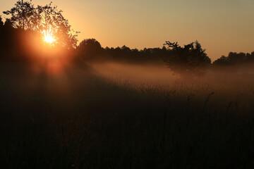 słońce przebijające się przez drzewo jego promyki
