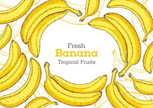 Banana fruit hand drawn frame. Vector illustration. Design, package, brochure illustration. Hand drawn banana fruits design template. Organic fresh food vector illustration.