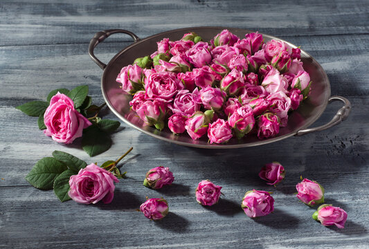 Fresh buds of tea roses