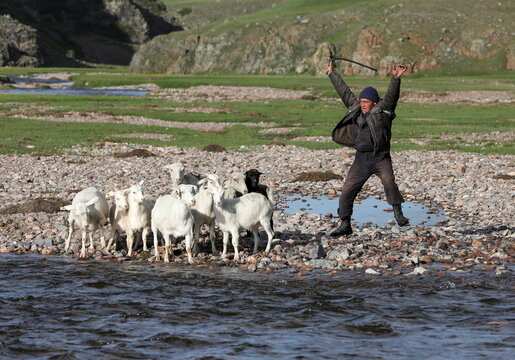 A shepherd guides goats and sheep across a river in Almaty Region