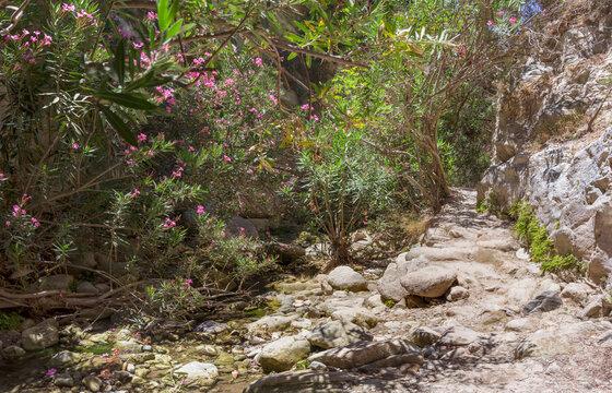 Avakas Gorge with steep rocks and river. Akamas peninsula, Cyprus.