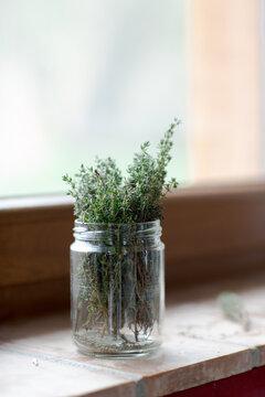 Fresh thyme in mason jar