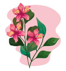 Fototapeta pink orchid flowers obraz