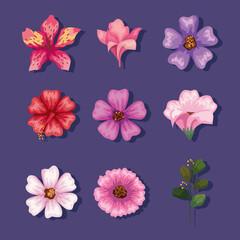 Fototapeta flowers icon collection obraz