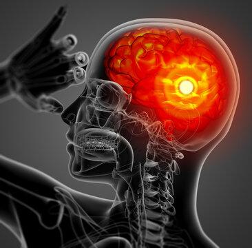 3D medical illustration of the brain