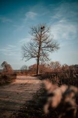 Drzewo bez liści przy drodze