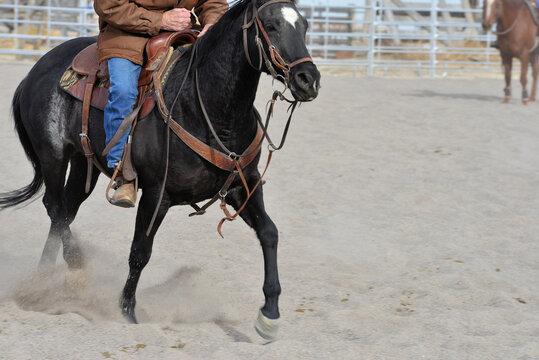 Rural Activity: Dexterous movement of cutting horse.