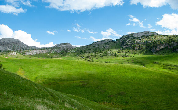 the green of the meadows in the high mountains in spring