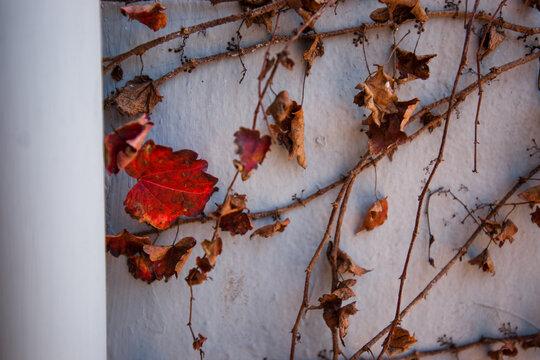 가을 그 외로움