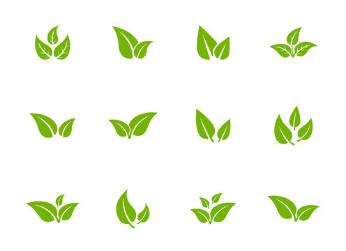 Set of isolated green leaf icons on white background. Various forms of green leaves of trees and plants. Abstract natural leaf icons. Elements for ecotypes and biotypes. Vector illustration. EPS 10