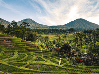 View on rice fields / rice terrace Jatiluwih Bali Indonesia.