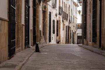 Blacks cats in Javea old town streets in Alicante, Spain