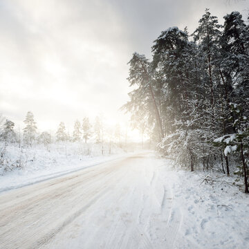 Snow-covered country road through the evergreen pine forest at sunset. Dramatic sky before snowstorm. Idyllic rural scene. Remote places, dangerous driving, off road, winter tires