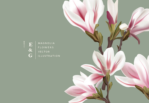 Natural magnolia realistic flowers contemporary event layout designs. Marketing floral pattern background vector illustration.