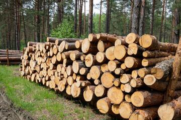 Fototapeta Leśne drewno przygotowane do transportu obraz