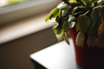 Obraz Roślina doniczkowa na brzegu stołu - fototapety do salonu