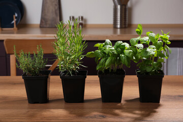 Fototapeta Pots with basil, thyme, mint and rosemary on wooden table in kitchen obraz