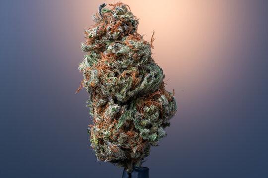 Cannabis Flower Macro - Strain: Red Eye Skunk