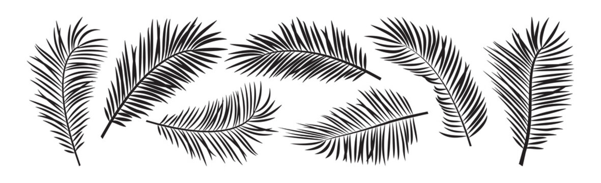 Palm leaf vector, black summer branch plant jungle, nature set icon isolated on white background. Tropic illustration