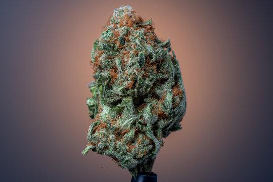 Cannabis Flower Macro - Strain: Green Crack
