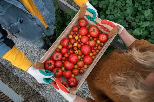 Crop farmers handing box of tomatoes