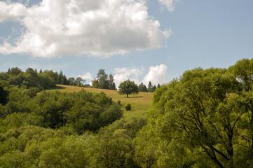 Krajobraz polana z samotnym drzewem pięknie oświetlona zachodzącym słońcem