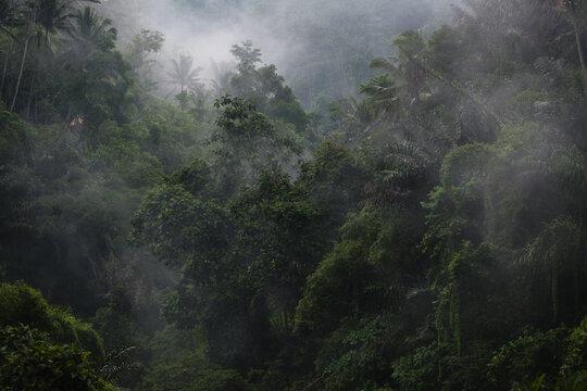 dawn fog in the jungle