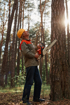 Worker in protective helmet and jacket with chainsaw looking up at high tree., cutting down trees, forest destruction. industrial destruction of trees, causing harm to the environment.