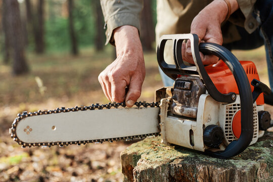 Faceless logger preparing chainsaw for work, cheking saw for faults, unknown logger forester with professional tool for cutting trees on background of forest.