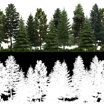 3D Render of Horizon Pine Trees Line in 4K available for loop. Tileable. For create Infinite Nature Background with alpha mask.