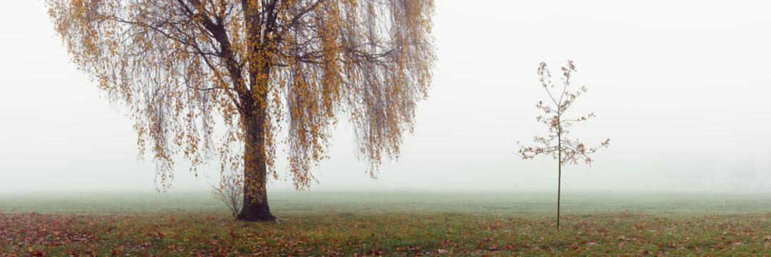 Willow tree on a misty autumn day