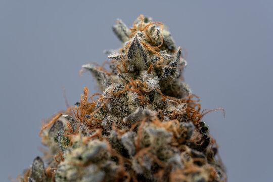 Cannabis Flower Macro - Strain: Jet Fuel