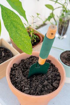 Gardening tools near potted plant on table