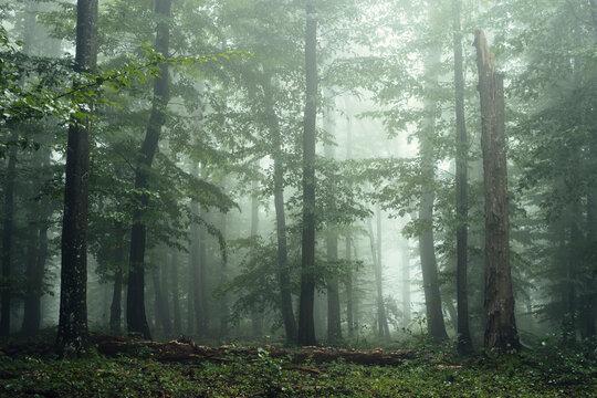 Green forest environment