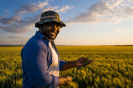 Farmer is standing in his growing wheat field. He is examining crops after successful sowing.