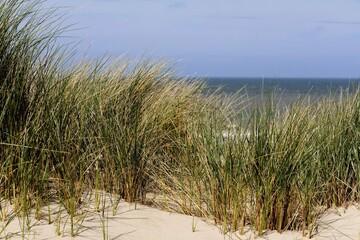 Fototapeta sand dunes and grass