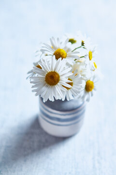 Daisy Flowers in a ceramic vase