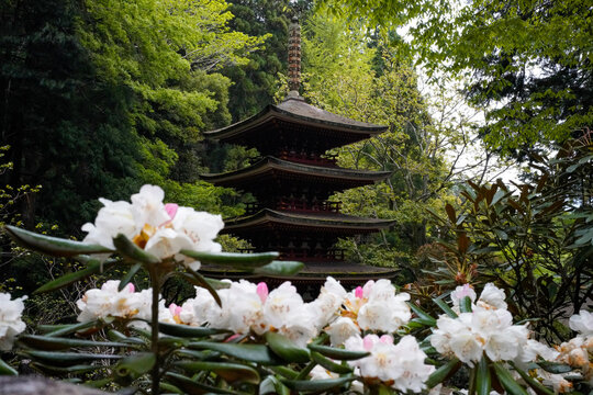 Murouji Temple in Nara.