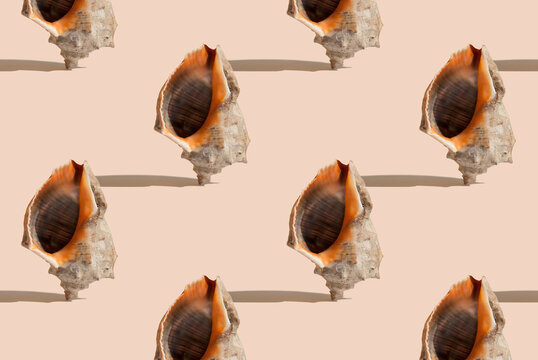 Summer pattern with sea shell on beige background. Minimal summer concept