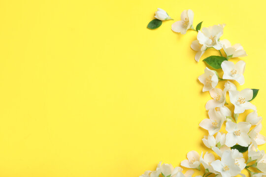 Beautiful jasmine flowers on yellow background, flat lay. Space for text